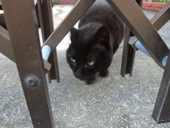近寄る黒猫