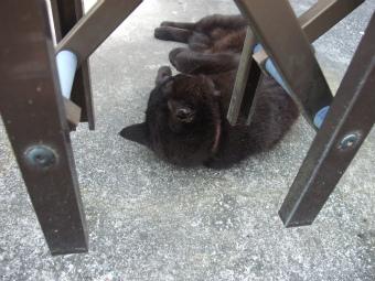 黒猫ごろん