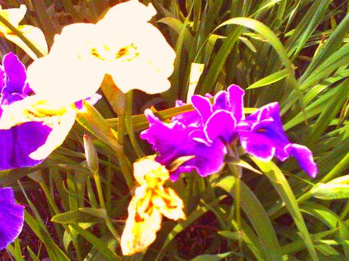 PICT0082_2015060722204811f.jpg