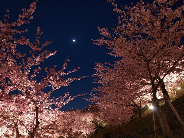 まつだ桜まつり後の葉桜を鑑賞