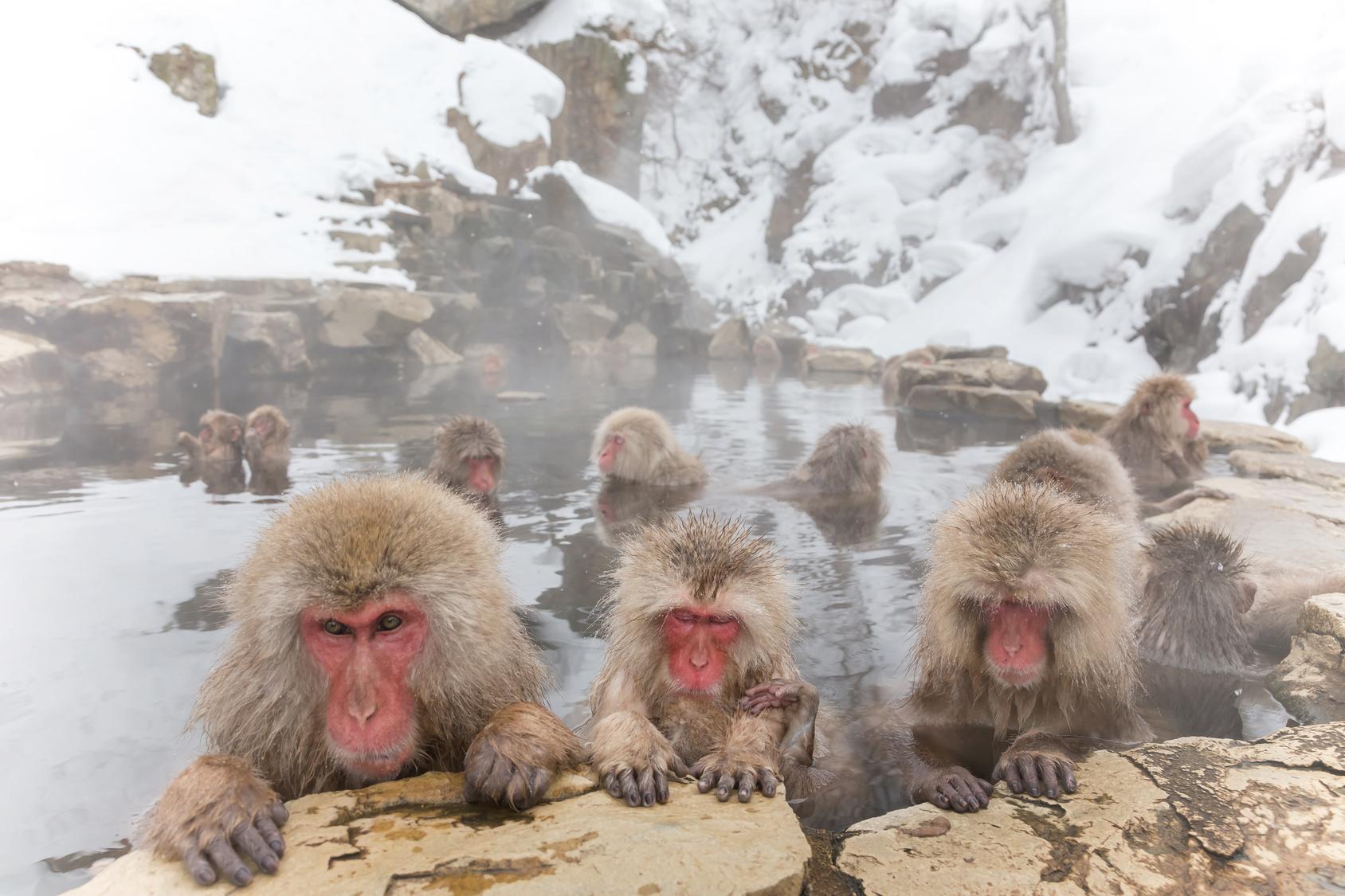 長野スキー遠足2日目・くらげとおサルと温泉