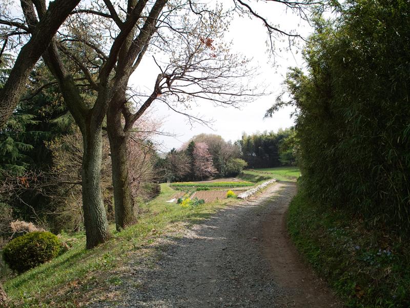 多摩丘陵の小山田緑地をぐるっと散策