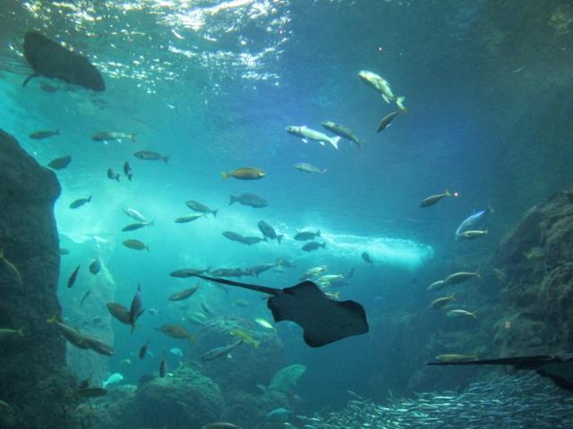 品川駅前からすぐの水族館でおさかなたちに出会う