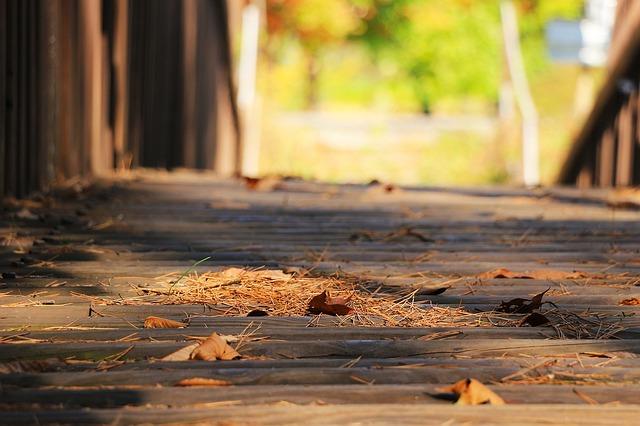 迷惑な落ち葉の侵入者