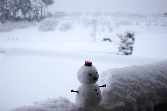 雪が降ってくらげは喜び、丘駆け回る