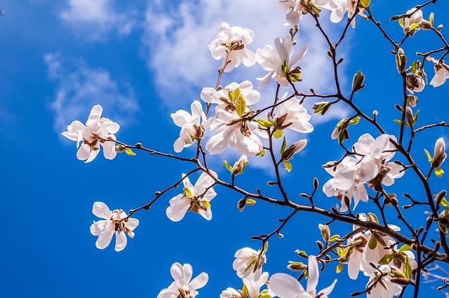 ダイキンのセラムヒートで春の温もりのような温かさを感じる