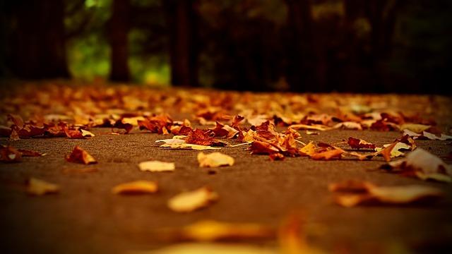 落ち葉の侵入