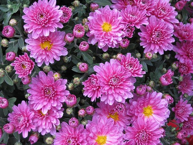 道了尊から、茶畑と石窯パン屋を経てざる菊園