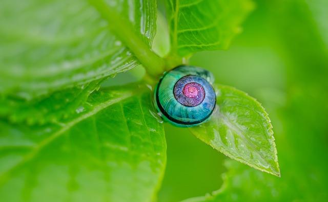 紫陽花蛙蝸牛