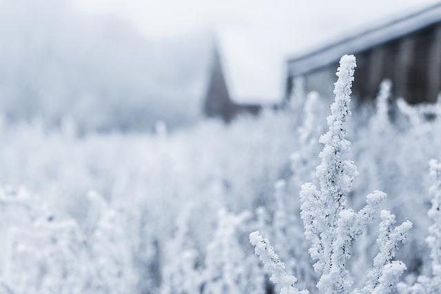 くらげ邸の窓から眺める雪景色
